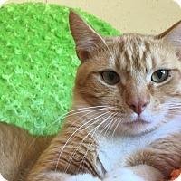 Adopt A Pet :: Linus - Chula Vista, CA
