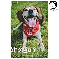 Adopt A Pet :: Shotgun - Novi, MI