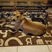 Adopt A Pet :: Jane - Del Rio, TX
