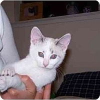 Adopt A Pet :: Simone - Davis, CA