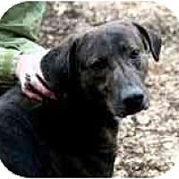 Adopt A Pet :: Jaime - FOSTER NEEDED! - Seattle, WA