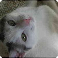 Adopt A Pet :: Joey - Davis, CA