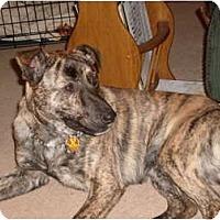 Adopt A Pet :: Joe - Windham, NH