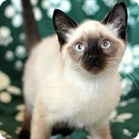 Adopt A Pet :: K-Indy1-Ina - Colorado Springs, CO