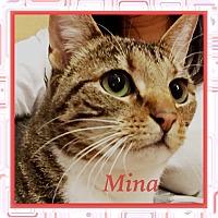 Adopt A Pet :: Mina - Foothill Ranch, CA