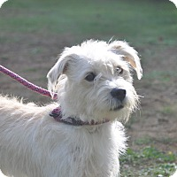 Adopt A Pet :: Cooper - Tumwater, WA
