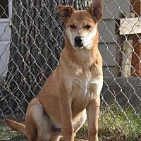 Adopt A Pet :: Bambi - Dodson, MT
