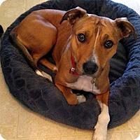 Adopt A Pet :: Bronte - Jefferson, NC