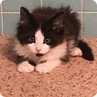 Adopt A Pet :: Philippe - Potomac, MD