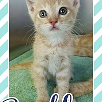 Adopt A Pet :: Bentley - Edwards AFB, CA