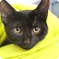 Adopt A Pet :: Gustave - Sarasota, FL