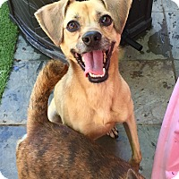 Adopt A Pet :: Peanut Butter - Santa Ana, CA