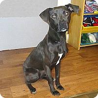 Adopt A Pet :: 17-d06-040 Bridget - Fayetteville, TN