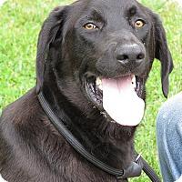 Adopt A Pet :: Costa - Midlothian, VA