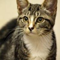 Adopt A Pet :: Ellie - Madison, GA