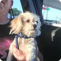 Adopt A Pet :: Carl - Hedgesville, WV