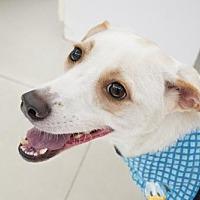Adopt A Pet :: Darren - Richmond, BC