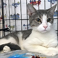 Adopt A Pet :: Juliet is Just Lovely, Inside & Out - Brooklyn, NY