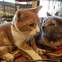 Adopt A Pet :: Blusher and Socks - Mission Viejo, CA