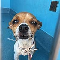 Adopt A Pet :: Olive - Encino, CA