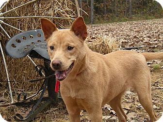 Carolina Dog Mix Dog for adoption in Vernon Hills, Illinois - Carolina