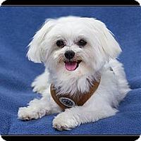 Adopt A Pet :: Little Leo - Fort Braff, CA