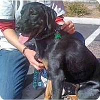 Adopt A Pet :: Natalie - Scottsdale, AZ