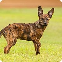 Adopt A Pet :: *Hazel - PENDING - Westport, CT
