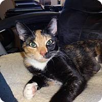 Adopt A Pet :: Betsy - Colmar, PA