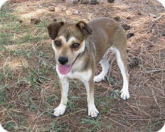 Hound (Unknown Type) Mix Dog for adoption in Huntsville, Alabama - Kendu
