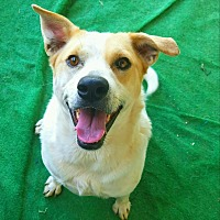 Adopt A Pet :: Sadie  #6 - Graceville, FL