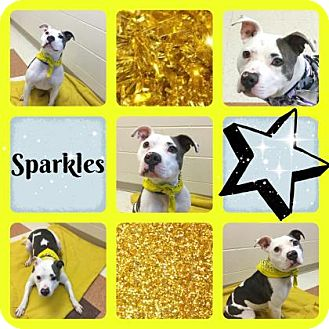 Pit Bull Terrier Mix Dog for adoption in Joliet, Illinois - Sparkles