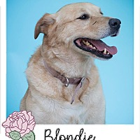 Adopt A Pet :: Blondie - Savannah, GA