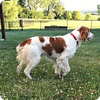 Adopt A Pet :: IA-Roscoe - Pierre, SD