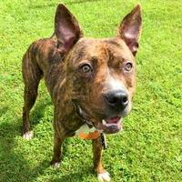 Adopt A Pet :: Bugsy - Janesville, WI