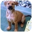 Photo 2 - Boxer Mix Puppy for adoption in El Cajon, California - boxer mix