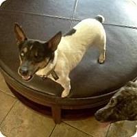 Adopt A Pet :: Pirate - Brooksville, FL