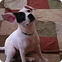 Adopt A Pet :: lzzie - Lancaster, OH