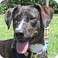 Adopt A Pet :: Katy - Kingwood, TX