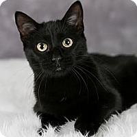 Adopt A Pet :: Ainsley - Eagan, MN