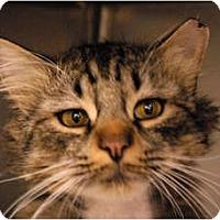 Adopt A Pet :: Oscar - Lunenburg, MA