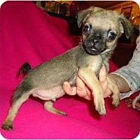 Adopt A Pet :: Hagen - Plainfield, CT