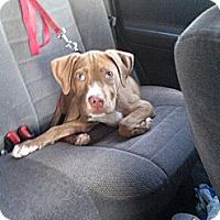Adopt A Pet :: Dharma - WARREN, OH