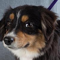 Adopt A Pet :: Bixby - Colorado Springs, CO
