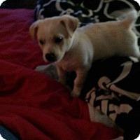 Adopt A Pet :: Seamus - East Hartford, CT
