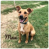 Adopt A Pet :: MAX - Ocala, FL