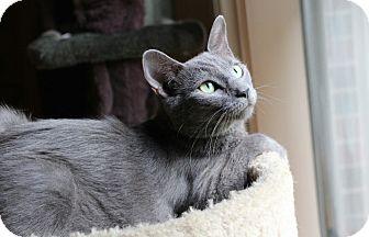 Domestic Shorthair Cat for adoption in Marietta, Georgia - Charity