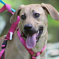 Adopt A Pet :: Cassie - Pawling, NY