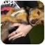 Photo 2 - Dachshund/Terrier (Unknown Type, Small) Mix Dog for adoption in Humble, Texas - Mia