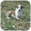 Photo 1 - Border Collie/Terrier (Unknown Type, Small) Mix Puppy for adoption in Plaquemine, Louisiana - Pickles